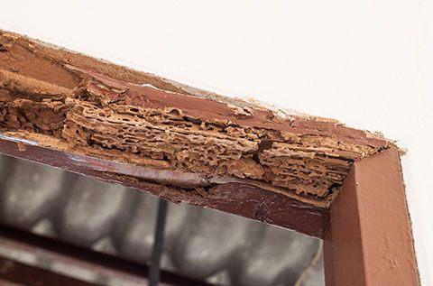 termite-damage