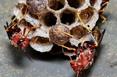 Wasp Removal & Pest Control Sydney – Pestige Solutions
