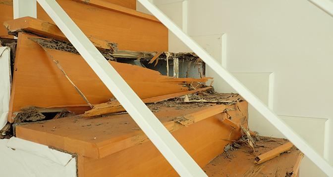 Pest control can prevent termite damage